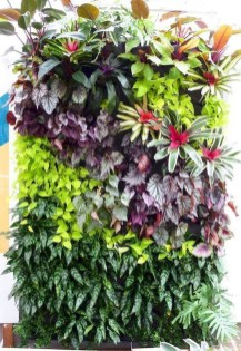 Succulents Living Walls Vertical Gardens Ideas38