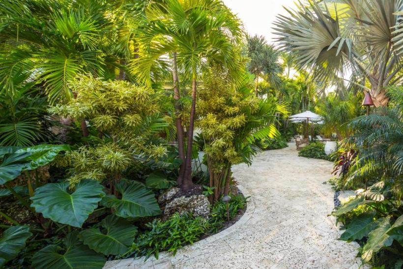 Tropical Garden Oasis at Your Backyard