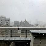 本町周辺に雪が降ってる!積もりそうな勢い