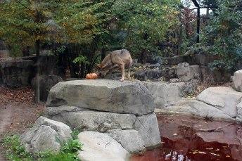 Zoo de Vincennes 81
