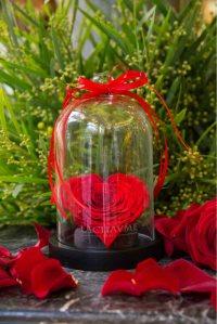5. Rose Éternelle sous cloche, Lachaume