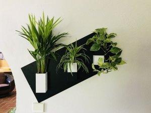 Un mur végétal pour les nuls