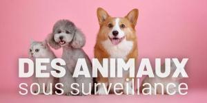 Des animaux sous surveillance