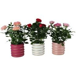 8. Mini rosier cache pot céramique, Jardiland