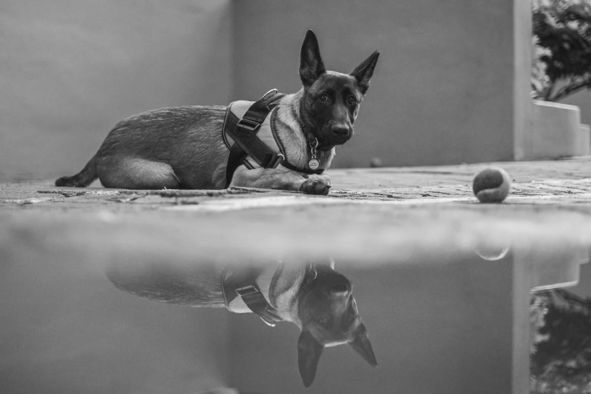 Le dressage de chiens | Passe-Temps pour Homme