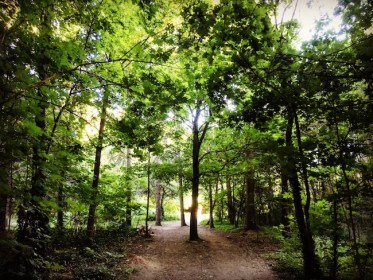 Bois de Vincennes