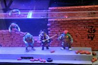 Teenage Mutant Hero Turtles im Aquarium