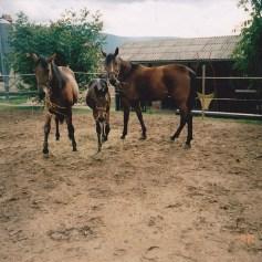 Konji-horde_0008