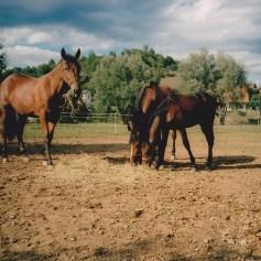 Konji-horde_0009