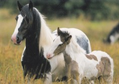 Konji-pari_0006