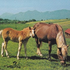 Konji-pari_0007