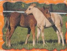 Konji-pari_0010