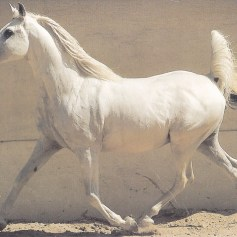 Konji_0003