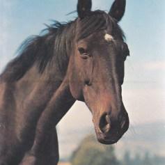 Konji_0007