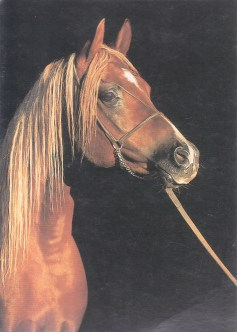 Konji_0009