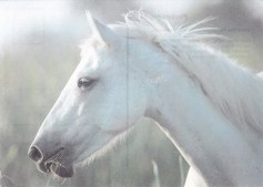 Konji_0010