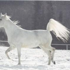 Konji_0011