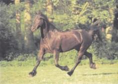 Konji_0018