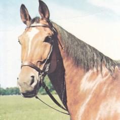 Konji_0020
