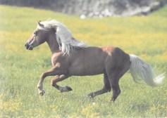 Konji_0021
