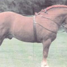 Konji_0022