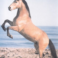 Konji_0023
