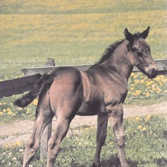 Konji_0024