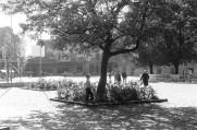 Trg svobode leta 1960