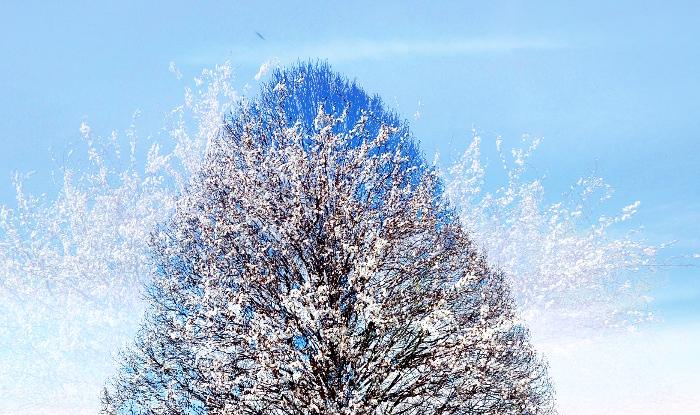 Drevo, Foto/montaža: Tanja Jerebic