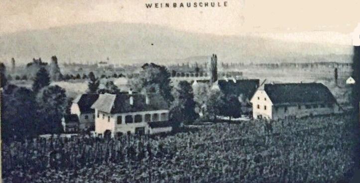 vinska sola_1898_(3)