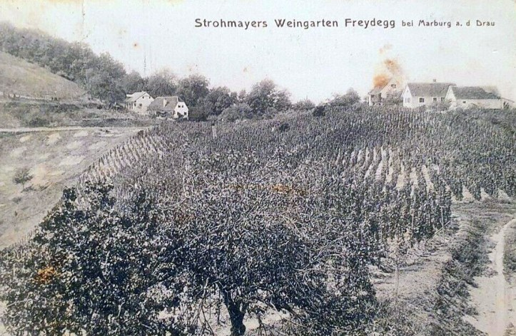 PEKEL- FREYDEGG