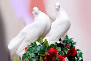 Создаем крепкие, гармоничные отношения в семье