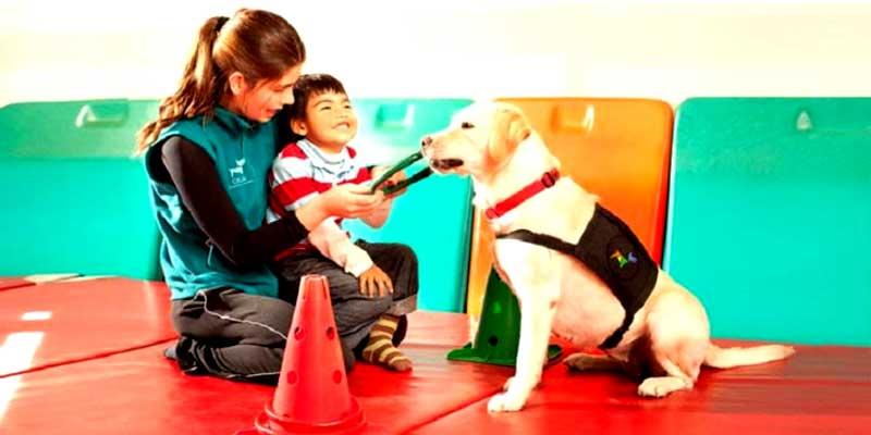 Actividades terapias con animales