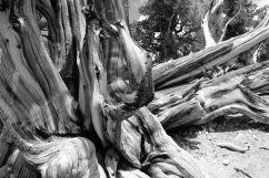 hr_fratus_california_schulmangrove_redux