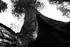 california_fratus_bn_lostgrove_redux