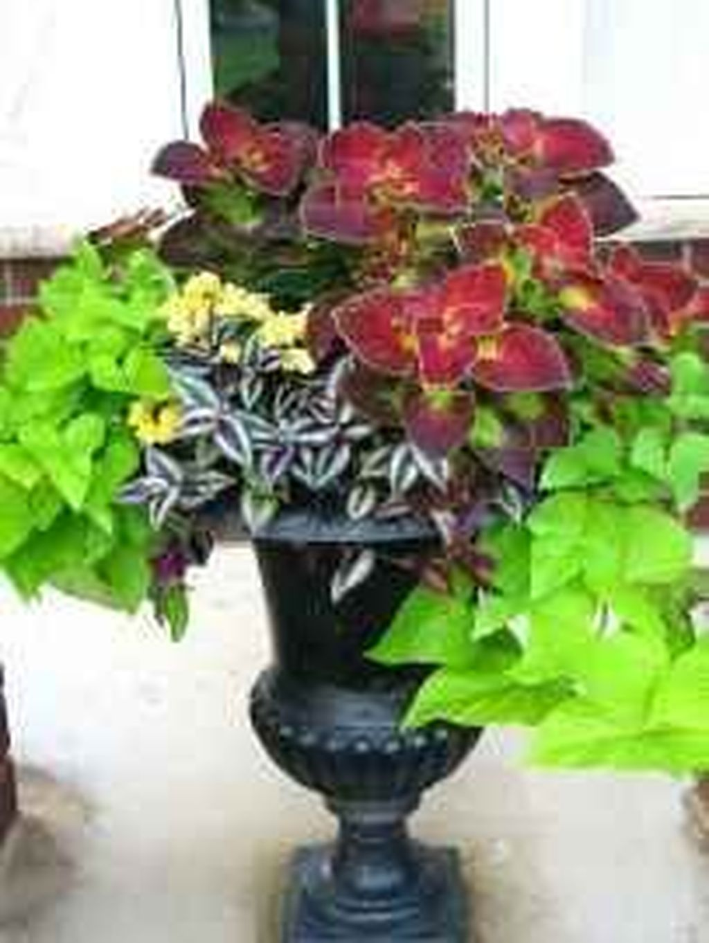 Lovely Combination Planting Container Gardening Ideas 09