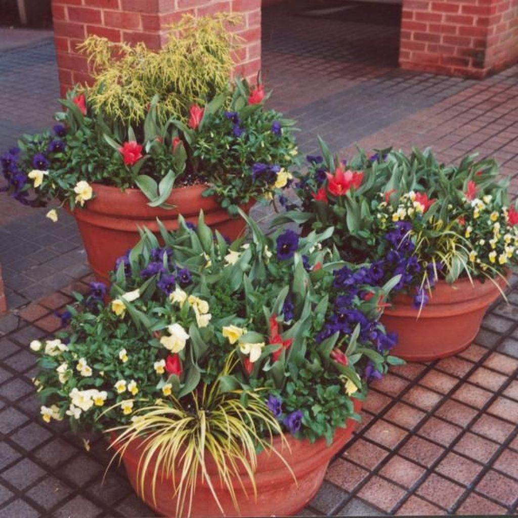 Lovely Combination Planting Container Gardening Ideas 19