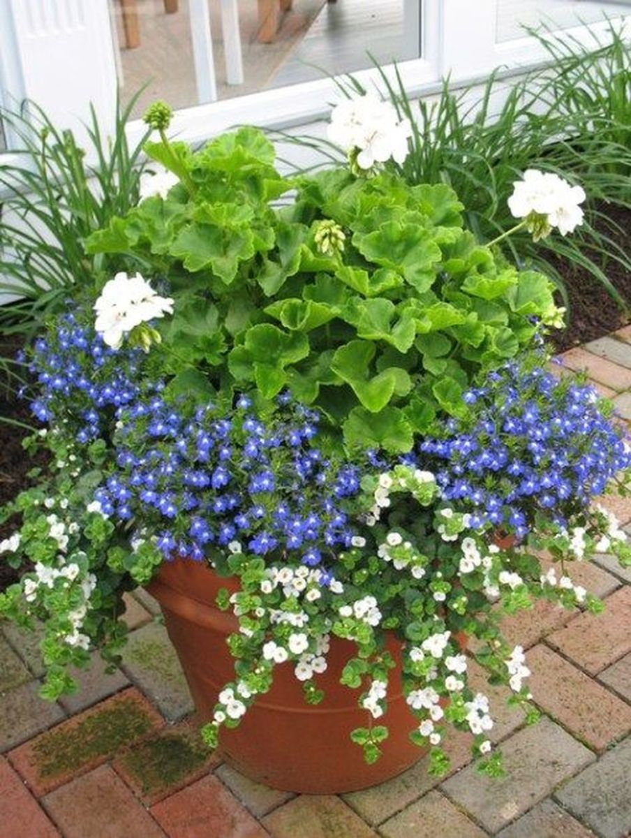 Lovely Combination Planting Container Gardening Ideas 23