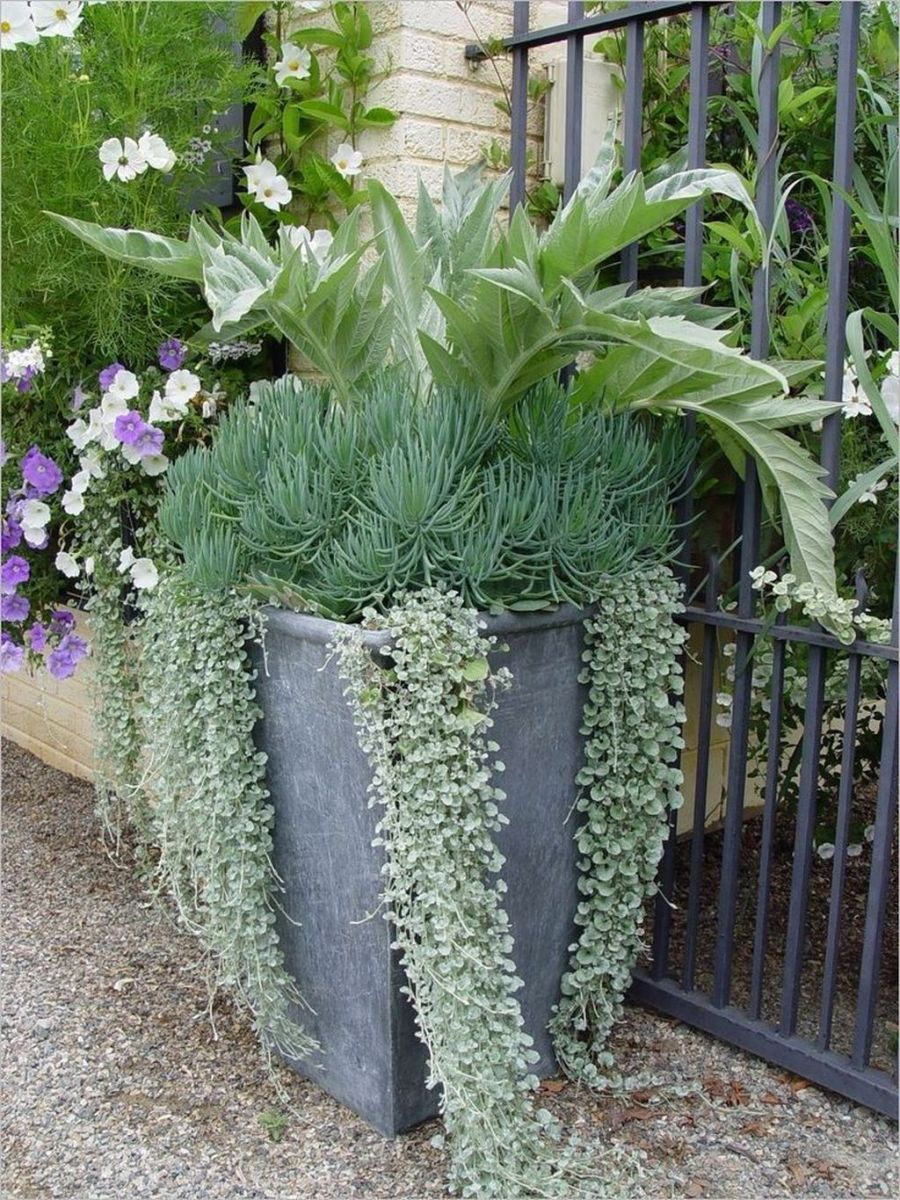 Lovely Combination Planting Container Gardening Ideas 32