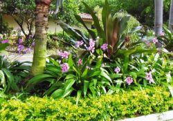 South Florida Garden Ideas