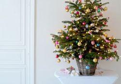 Small Real Christmas Tree