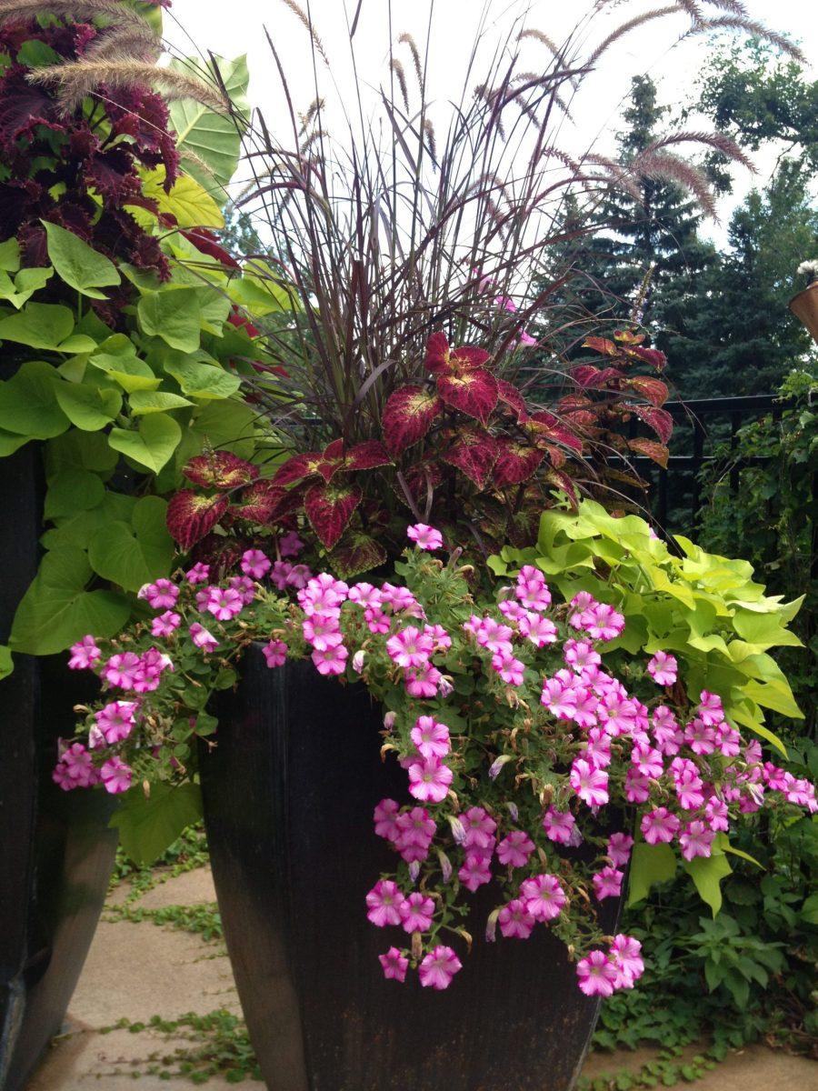 Outdoor Plants Full Sun