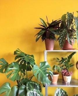 Extraordinary Indoor Garden Design And Remodel Ideas For Apartment 15
