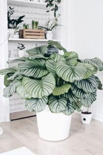 Extraordinary Indoor Garden Design And Remodel Ideas For Apartment 29