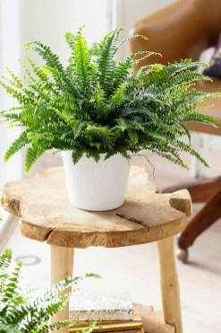 Extraordinary Indoor Garden Design And Remodel Ideas For Apartment 35