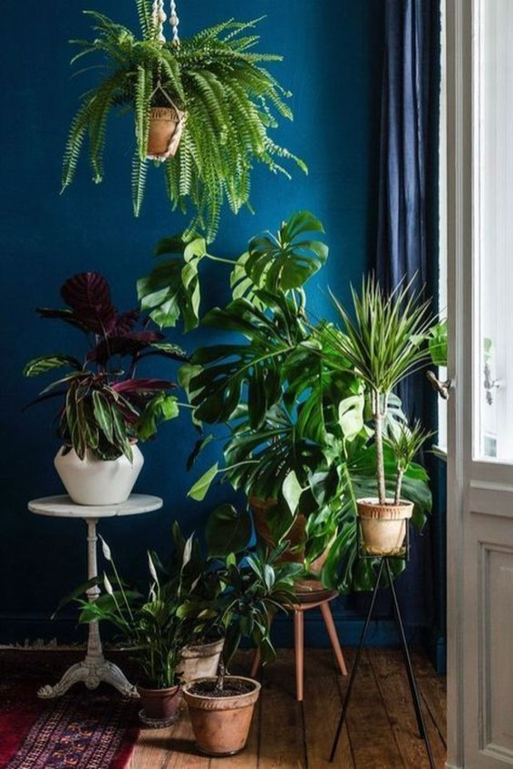 Extraordinary Indoor Garden Design And Remodel Ideas For Apartment 52