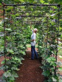 Exciting Ideas To Grow Veggies In Your Garden 06
