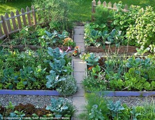 Exciting Ideas To Grow Veggies In Your Garden 11
