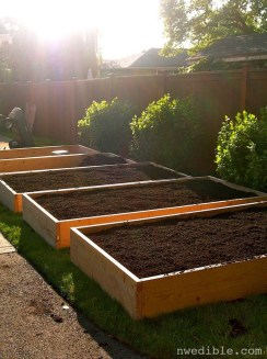 Exciting Ideas To Grow Veggies In Your Garden 19