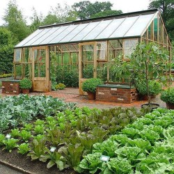 Exciting Ideas To Grow Veggies In Your Garden 25